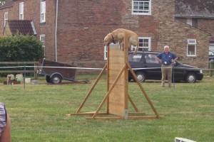 dog_agility_2