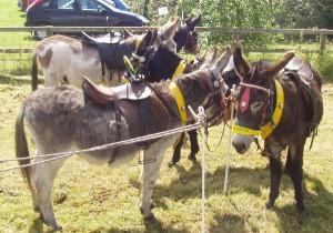 donkeys_1