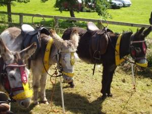 donkeys_2