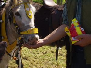 donkeys_3