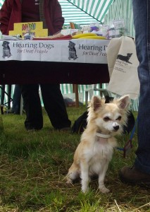 hearing_dogs